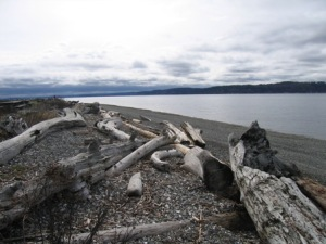 camano-island-state-park-driftwood