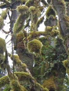 mossy-orb