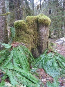 mossy-stump