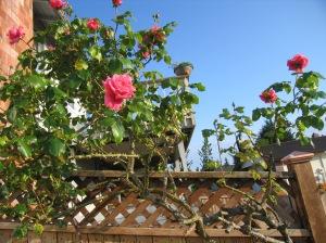 pen's garden 6-7-09 007