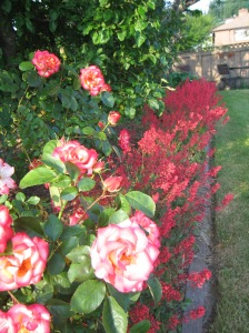 Grandma Hilda's Rose and huchera border